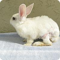 Adopt A Pet :: Dudley - Bonita, CA
