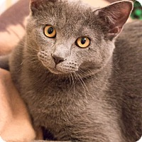 Adopt A Pet :: Donny - Chicago, IL