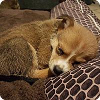 Adopt A Pet :: Tiny - Broken Arrow, OK