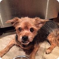 Adopt A Pet :: Tanya - N. Babylon, NY
