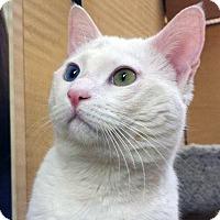 Adopt A Pet :: Mr. Valentine - Irvine, CA