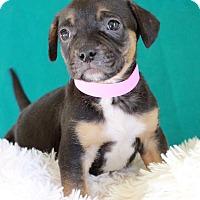 Adopt A Pet :: Skye - Waldorf, MD