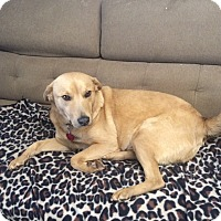 Adopt A Pet :: Gen(evieve) in CT - Manchester, CT