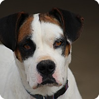 Adopt A Pet :: Sissy~adopted! - Glastonbury, CT