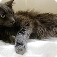 Adopt A Pet :: LOUIE LOUIE - DeLand, FL