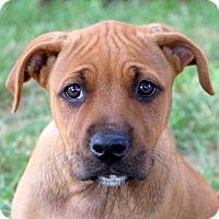 Adopt A Pet :: June Bug - Glastonbury, CT
