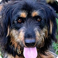 Adopt A Pet :: MURPHY(OUR