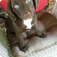 Adopt A Pet :: Rosie - Aurora, CO