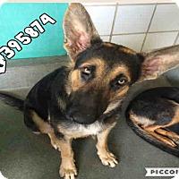 Adopt A Pet :: FINLEE - SAN ANTONIO, TX