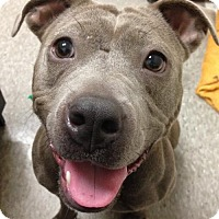 Adopt A Pet :: Trista - Philadelphia, PA