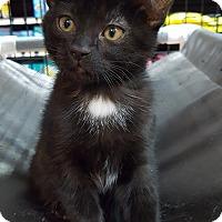 Adopt A Pet :: Tess - Toronto, ON