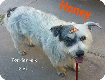 Terrier (Unknown Type, Medium) Mix Dog for adoption in DeForest, Wisconsin - Honey
