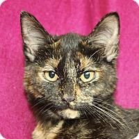 Adopt A Pet :: Jewel - Jackson, MI