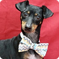 Adopt A Pet :: Toto - Picayune, MS