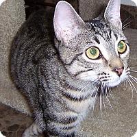 Adopt A Pet :: Poncho - Oklahoma City, OK