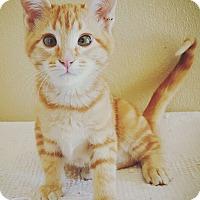 Adopt A Pet :: Tripp - Fredericksburg, TX