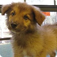 Adopt A Pet :: Gordita - Groton, MA
