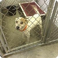 Adopt A Pet :: MADDIE - Grand Island, FL