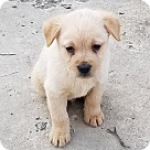 Adopt A Pet :: Baby Bruno