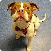 Adopt A Pet :: Atticus (Bishop) - Queenstown, MD