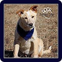 Adopt A Pet :: Kip - Albany, NY
