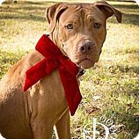 Adopt A Pet :: Pi - Tallahassee, FL