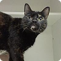 Adopt A Pet :: Augusta Webster - Richboro, PA