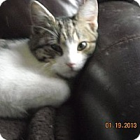 Adopt A Pet :: Sonny - Riverside, RI