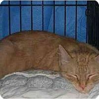 Adopt A Pet :: Gloria - Westfield, MA