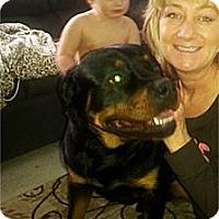 Adopt A Pet :: Buddy-ADOPTION PENDING - Mason, MI