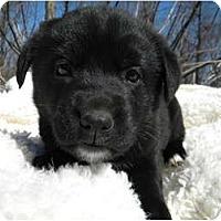 Adopt A Pet :: Jules - Rigaud, QC