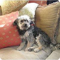 Adopt A Pet :: Cheena - San Diego, CA