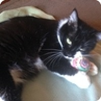 Adopt A Pet :: Anne - Vancouver, BC