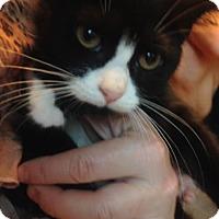 Adopt A Pet :: BlackJack - East Brunswick, NJ