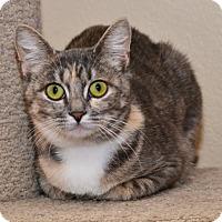 Adopt A Pet :: Phoebe Anne - Davis, CA