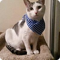 Adopt A Pet :: Callou - San Diego, CA