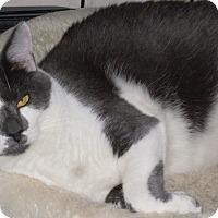 Adopt A Pet :: Dorsey - Buhl, ID