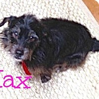 Adopt A Pet :: Max Terrier (Courtesy Post) - Scottsdale, AZ