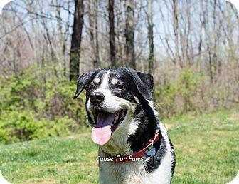 Senior Dog Rescue Columbus Ohio