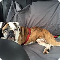 Adopt A Pet :: Tank - Columbus, OH
