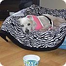 Adopt A Pet :: Skiddles
