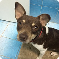 Adopt A Pet :: Sasha - Hialeah, FL