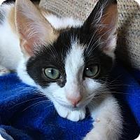 Adopt A Pet :: Hallmark - Fairfax, VA