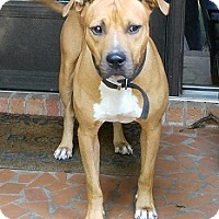 Adopt A Pet :: Roscoe - Waxhaw, NC