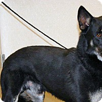 Adopt A Pet :: Donovan - Wildomar, CA