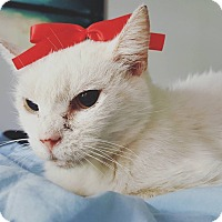 Adopt A Pet :: SNOWCONE! - Philadelphia, PA