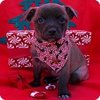 Adopt A Pet :: Ringo - Irvine, CA