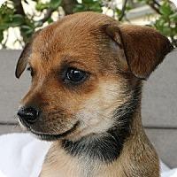 Adopt A Pet :: Zena - La Costa, CA
