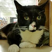 Adopt A Pet :: Pussinboots - Salem, NH