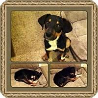 Adopt A Pet :: Flick - Hancock, MI